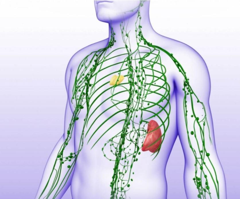 sistemul-limfatic
